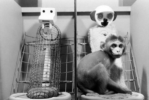 wireframe monkey