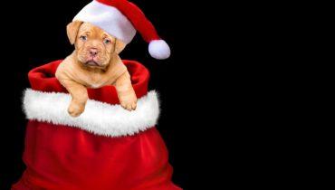 Christmas-Blessing-Dog