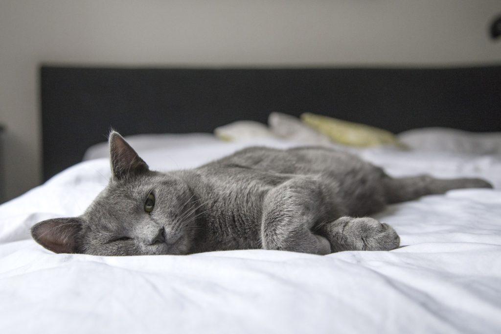 Comfort-Bed-Cat