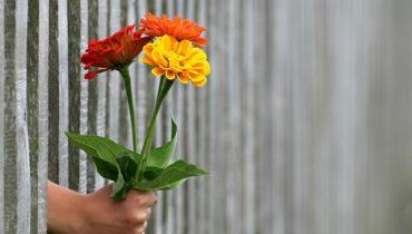 Kindness-Hand-Flower