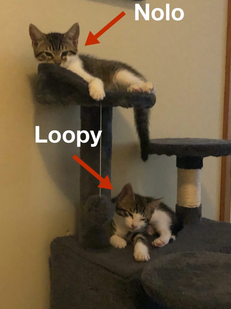 Loopy and Nolo