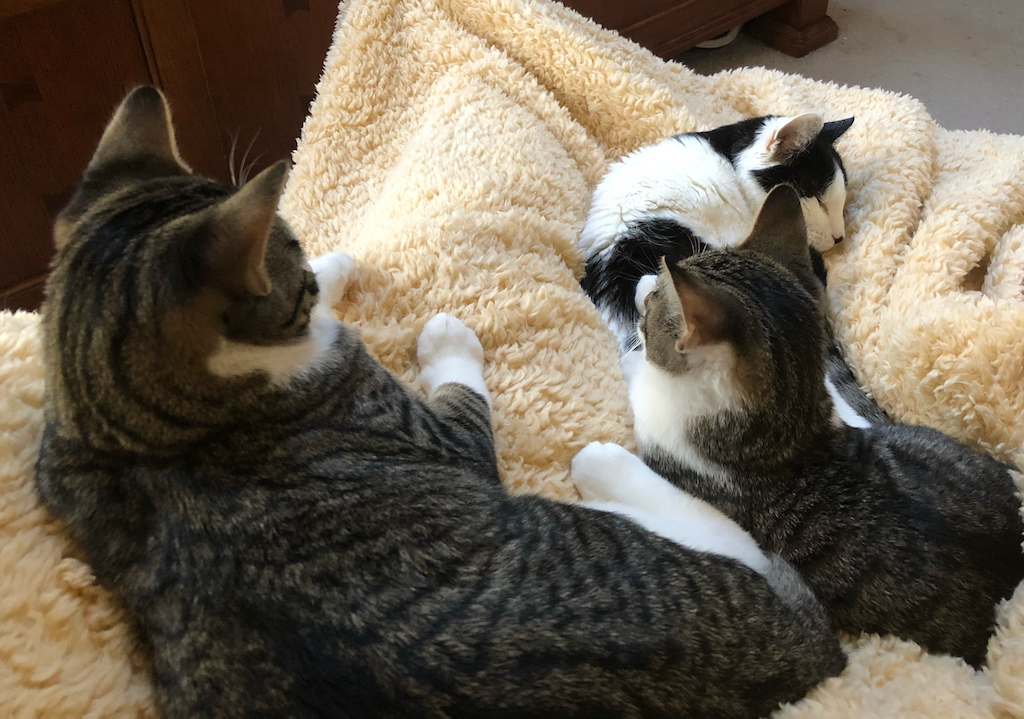 what I learned about acceptance from my cats