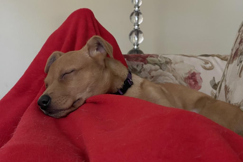 Zara Asleep on the Legs
